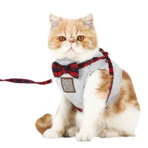 Pet Supplies Kitten Leash Bowknot Kitten Harnesses
