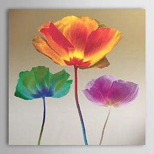 Hand-painted Oil Painting Poppy Chromatic by Robert Mertens without Frame