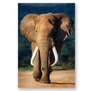Frameless Oil Painting Elephant Modern Minimalist Canva 12