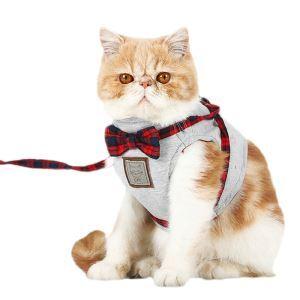 Pet Supplies Kitten Leash Bowknot Kitten Harnesses