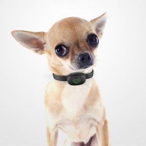 Pet Anti Barking Device Large Dog Small Dog Training Device Charging Shocking Collar without Remote Control
